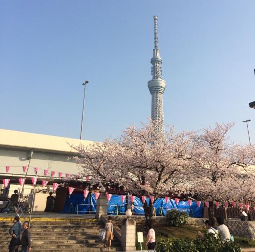 asakusa skytree sakura-2