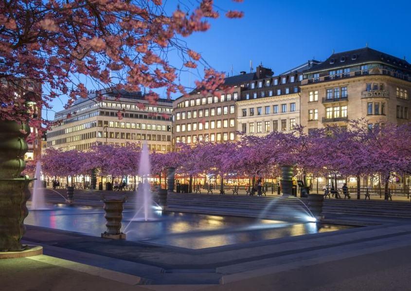 スウェーデン桜