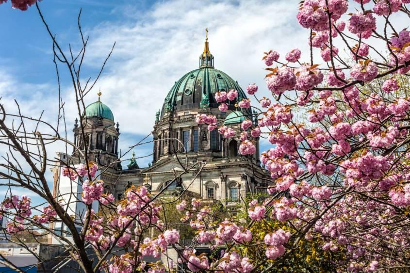 ベルリン桜