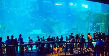 セントーサー水族館